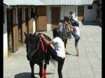 О школе конного спорта