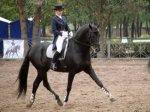 О занятиях в школе конного спорта
